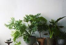 Home :: plants  / by Michaela Prescott