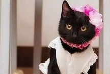 Cats in Costumes / Fashionista Cats / by ModernCatDesigns.com