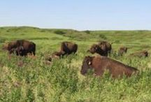 Conservation / Resources for preserving the Flint Hills. / by Flint Hills Discovery Center in Manhattan, KS
