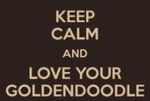 Goldendoodles - World's Greatest Dogs!  / www.stroodlesdoodles.com  / by Tiffany Marshall