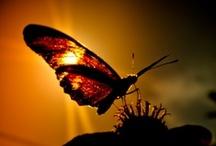 Butterflies/Dragonflies/Moths / by Chantelle Sharrow