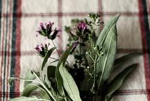 plants / by Izumi Okada