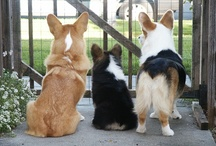 Corgi Butts of Love, Art & Royalty / Collection of Furry Love / by Lorrie Cordova