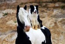 Animals so beautiful!! / Het mooiste op aarde, en afhankelijk van ons! / by Henny Tuinhof de Moed