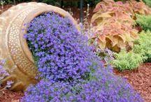 Love the purple and blue garden. / by Henny Tuinhof de Moed