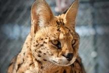 Animals & Environmental Conservation / by Valerie Underwood