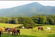 Fort Valley, Virginia / where great-grandpap's family came from / by jdynbttn :)