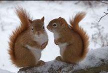 Écureuils -  Squirrels / Écureuils de toutes sortes, j'adore ces petites boules de poils! / by Isabelle Robert