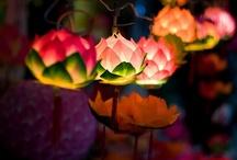 secret garden... / by marta woo