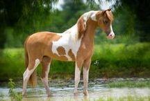 Beautiful Horses / by Rhi Stormborne
