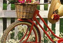 Bicycle / by Miroslava