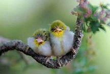 Birds - Vogels / by Linda Op 't Eijnde