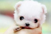 adorable / by Harry Candelario