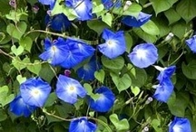 Gardening / Beautiful plants and ideas for your home garden / by Trinity Air,