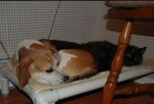 Beagle / Beagles enjoying Kuranda beds! / by Kuranda Dog Beds