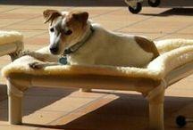 Jack Russel Terrier / Jack Russel Terriers and their Kuranda beds! / by Kuranda Dog Beds