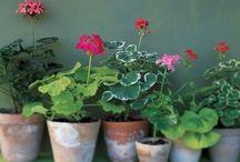 Gardening / by Deb Baumstark