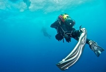 Diving / by Josep Soldevila