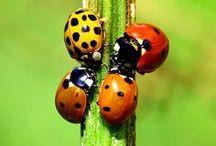 bugs / by Janie Mcduffie
