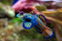 MARINE FISH FAVOURITES / by Aquabotanika