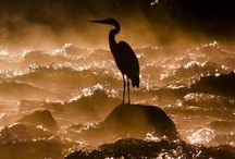 Photos: Wild Ones / This board is for what I know is beyond my purview:  UNDERWATER and WILDLIFE photography, including birds.   / by Anthea Hasler