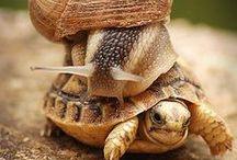 §5:  Shell-Dwellers:  I Carry My Home / Snails, hermit crabs, turtles....Anything that lives in a shell (home) that it carries on its back here on land (not sea). / by Anthea Hasler