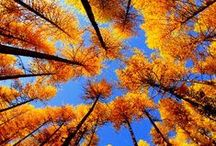 FALL!  / My favorite time of year! / by Nikki Brown