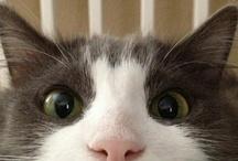 Soft Kitty. Warm Kitty. Little ball of fur / Who doesn't love Sheldon's Soft Kitty Song? / by IndigoChild Oshun