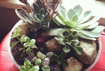 Succulents obsession / by KT