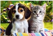 For Our Pets <3 / by A.M.P. FLORACEL®