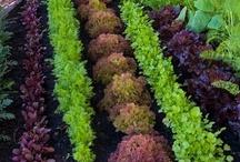 Gardening Tips / by Darlene Brown