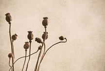 Seeds / by Anneke van Bostelen