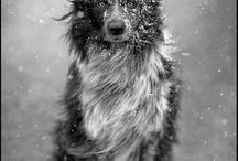 Animals / by Chantele Hunter