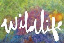 WILDLIFE / by Agnes Krause