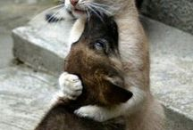 Makes me happy / Anything that makes me smile...mainly cute animals! / by Sarah Cross