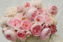 Flowers / Transient beauty............... / by Carol Downes