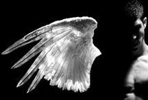 Wings / by Lindsay J. Pryor
