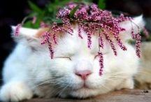 white cats ^>( ).( )<^  / by ˙·●๑۩  eleni  ۩๑●·˙