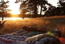 #wildandfree #camping / by Rhys Taylor