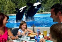 Dine with Shamu / It's Orlando's most immersive and memorable family dining experience -- Dine With Shamu at SeaWorld Orlando. Get closer than ever to the majestic whales while enjoying a delicious menu of seasonal and sustainable items at your reserved poolside table. 