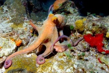 Octopi / A collection of fan favorite photos shared Jan 2013 on PADI's Facebook page. / by PADI