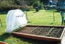 Gardening love / by Prairie Peasant