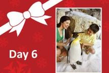 12 Days of Christmas Celebration Facebook Sweepstakes / Celebrate the 12 Days of Christmas SeaWorld-style with daily giveaways to win park admission, up-close animal experiences, exclusive SeaWorld merchandise and more! Stay connected on Facebook for clues and a chance to win daily. #SeaWorldChristmas #12DaysofChristmas #christmasgiveaway / by SeaWorld