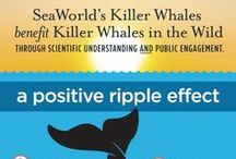 Infographics / Learn more about the animals you love! / by SeaWorld