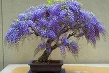 Bonsai Trees / by Nickie Huddleston Turner