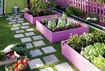 Gardening / by Heather Binder