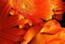 Shades of Persimmon Luv / All things persimmon colored!  / by Mich Wallnz