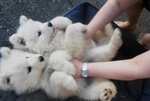 Free Therapy / Who needs a therapist when we have puppy cuddles and these adorable animals!  / by Mich Wallnz