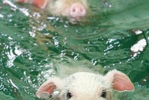Piglets / by FlyingPig Too