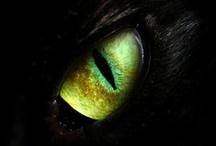 Eyes / by Susan Pillsbury